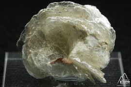 Polylithionite
